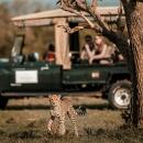 Cheetah_SafariCar