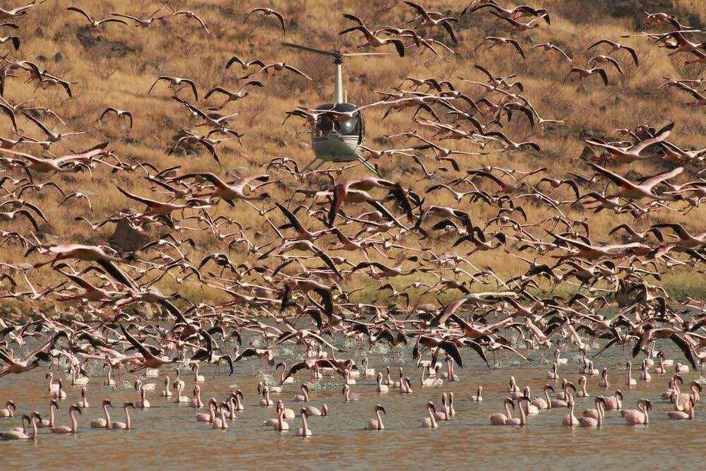 Kurt_Hadener.Chopper&flamingos