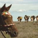 OM Nomad Horse&Camel